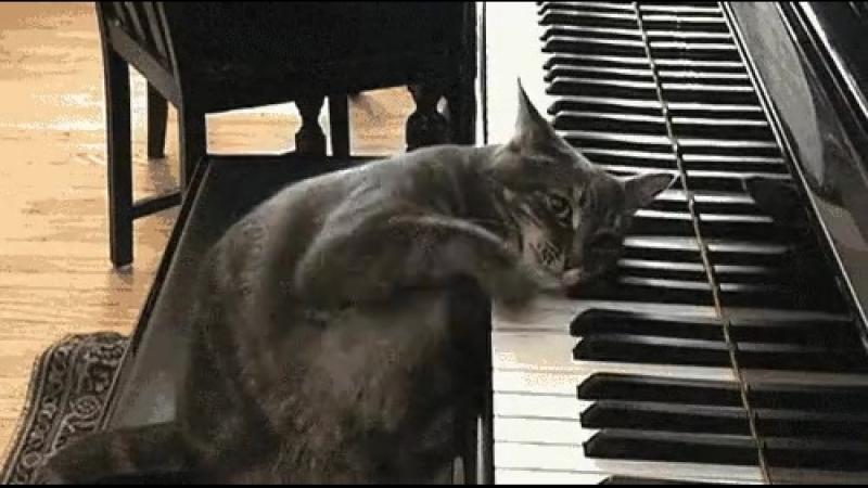 А сейчас для вас сыграет .... японская пианистка ... ХерануКа ПоРоялю