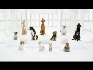 Собаки исполняют Имперский марш.