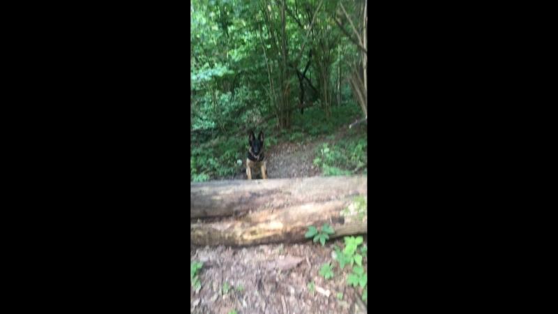 Тренируемся в лесу