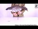 Видео инструкция по сборки чучел