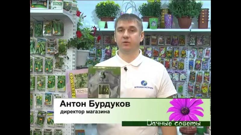Огурцы Ноябрь 2017-02