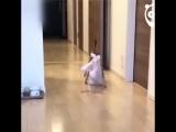 Котик всегда носит с собой свою любимую игрушку