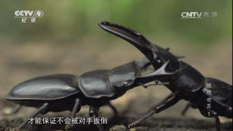 Микрокосм ''ВэйГуаньШиЦзе'', или ''Другой мир вокруг китайцев''. Первый эпизод ''Цян Жо Чжи Цзянь'' (Между сильным и слабым).