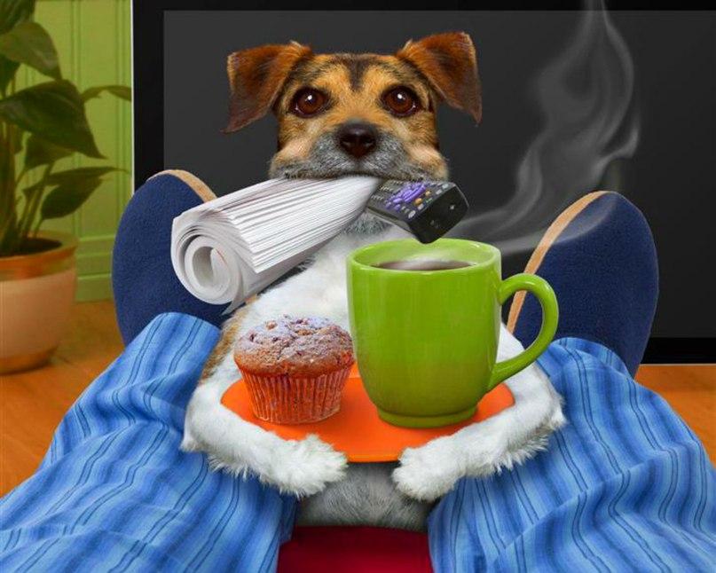 Фото, картинки про доброе утро прикольные собаками