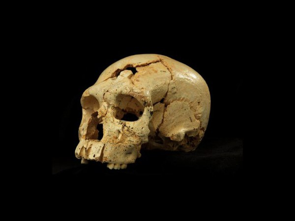 Эволюция человека: на сколько процентов мы неандертальцы? Рассказывает биолог Ф... 'djk.wbz xtkjdtrf: yf crjkmrj ghjwtynjd vs yt