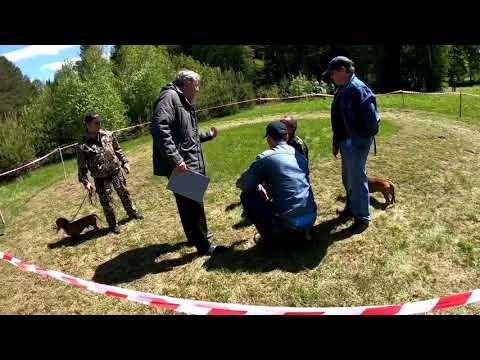 64-я Слободская районная выставка охотничьих собак