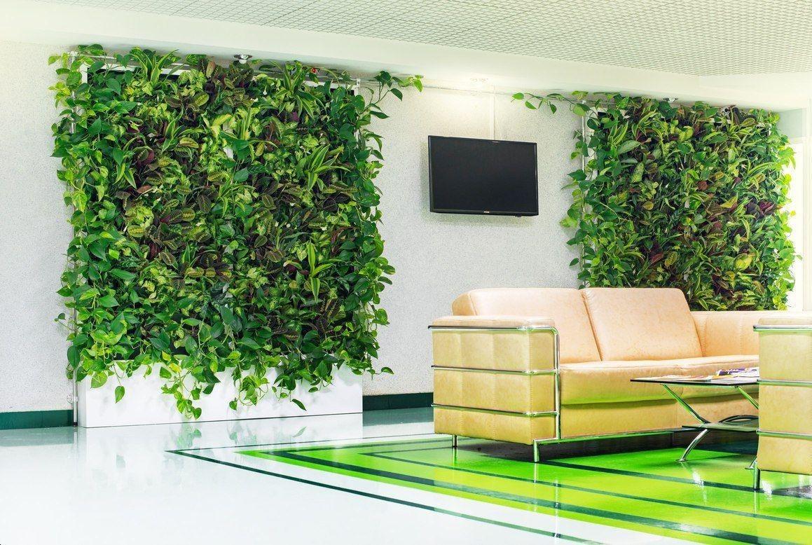 Вертикальное озеленение в офисе своими руками 34