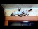 Cats can find da wey