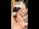La hormiga voladora Sanjuanera