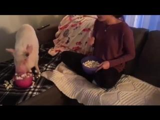 Когда смотришь сериал с любимым