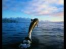 Крах теории эволюции. Факт создания жизни Богом Каждый кто думает, что он образован, просмотреть!!