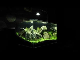 Aquascaper 600 Nature Aquarium at 5 weeks