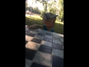 Ксюша Печорина — Live