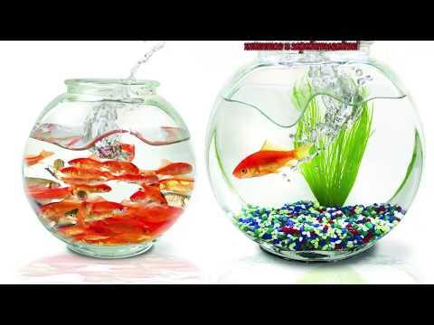 Бизнес на аквариумных рыбках и растениях бизнес идея
