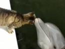 Дружба кота и дельфина