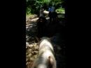 Абхазия, конная прогулка в ущелье Бабы-Яги😨