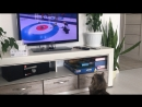 My mom's cat watching The Olympic Games