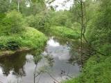 рощино, рощинка, река, поход, одиночный поход вдоль реки рощинки, прогулка по лесу, черника, доты, дот, дзот, линия маннергейма,