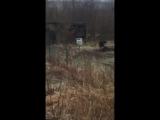 Охотоведы застрелили медведя, который бродил по Петропавловску