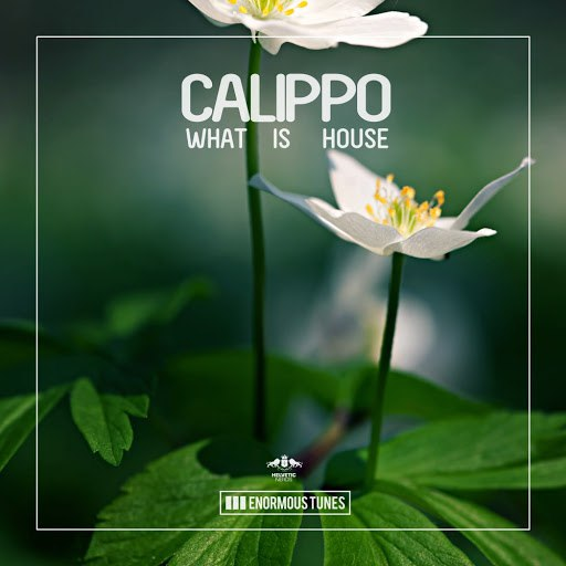 Calippo альбом What Is House