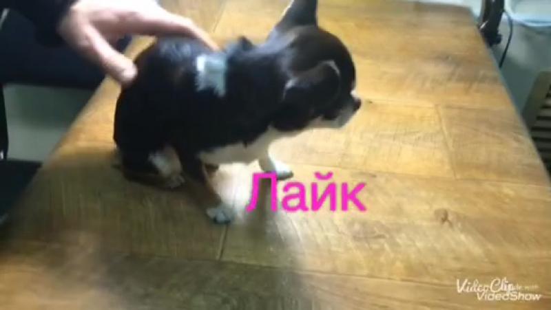 Vlog: поездка в ветеринарную клинику | Дана трусишка | Big Dog DANA❤