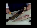 Как правильно чистить щуку ножом (480p).mp4