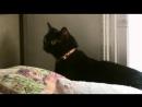 03 Адская кошка