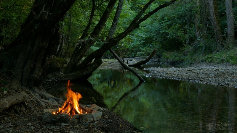 4K Campfire by the River - Relaxing Fireplace Nature Sounds - Robin Birdsong - UHD Video - 2160p