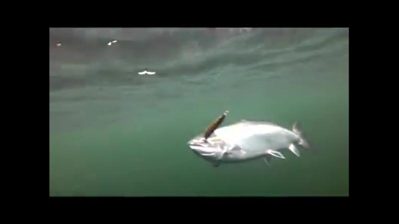 Троллинг лосося