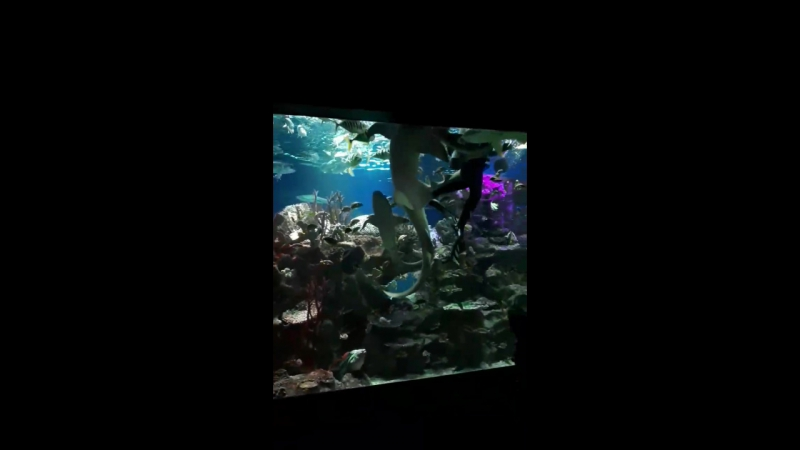 океанариум.кормление акул