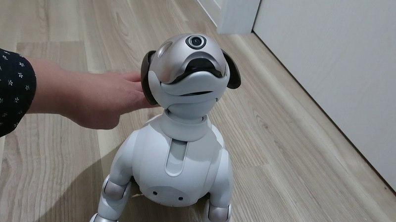 Умный робот собака для детей и взрослых - Aibo