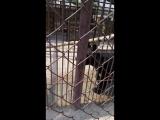 Барнаул зоопарк