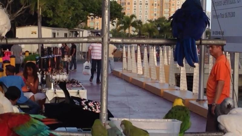 Пуэрто-Рико. Даже попугай показывает, что съемка запрещена !