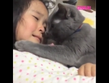 Кошка успокаивает плачущую девочку