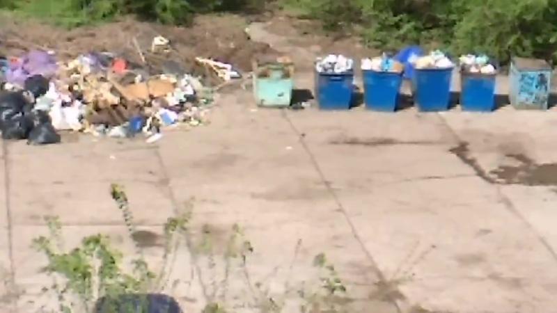 Вслед за комарами налетят сюда и мухи. Жительница Балакова пожаловалась на шикарную мусорную кучу