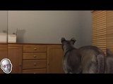5 Dogs That Saw Something Their Owners Couldnt See