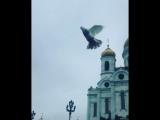 قرب اكبر كنيسه في موسكو
