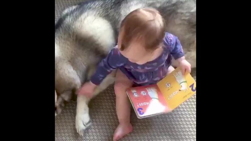 Говорят, что собаки - это лучший друг человека, а мы говорим, что они семья