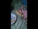 Дарся ест дыню