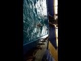 плаванье с дельфинами 22.05.18