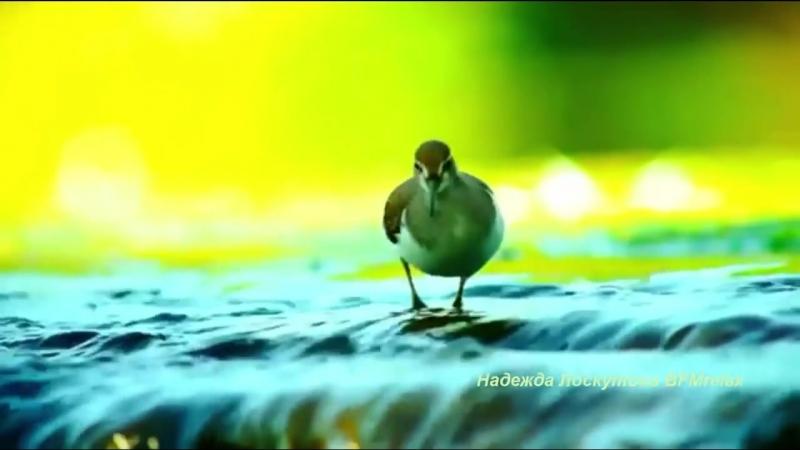 пение птиц лечебное-помогает от давления