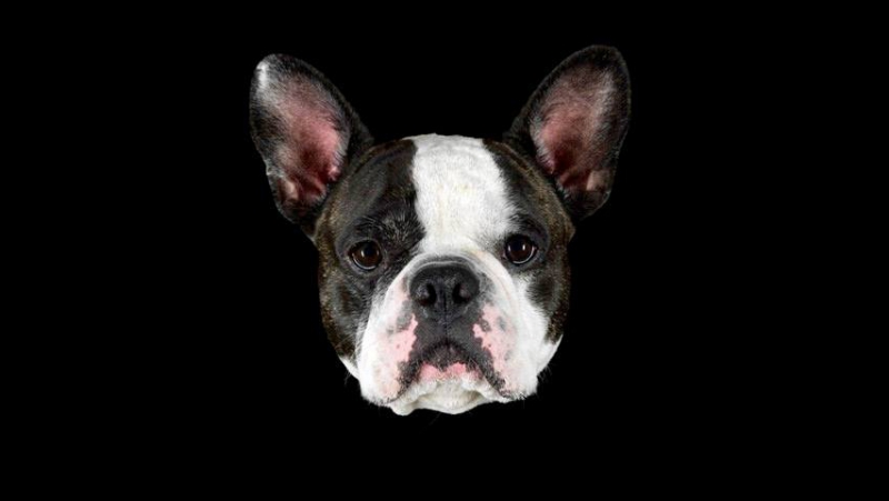 Perro policia / Инспектор Крузо собаки полиции