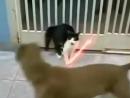Кот Дарта Вейдера с джедайскими мечами