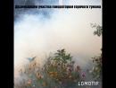 Дезинсекция участка генератором горячего тумана в Саратове