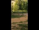 Граля стритрейсер жук скарабей