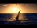 Анатомия крупнейших животных Большая Белая Акула