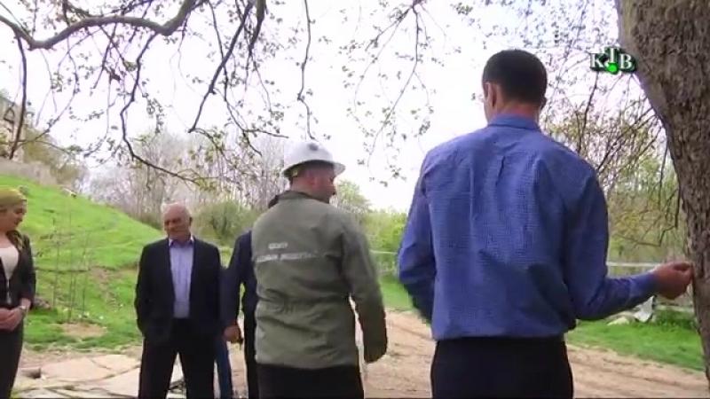 Специалисты НПСА «Здоровый лес» обследовали платан в Юждаге