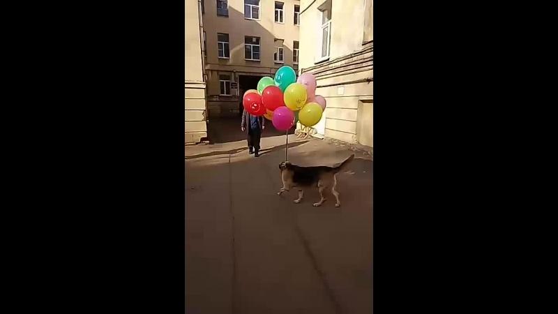 Александр Коптев - Live