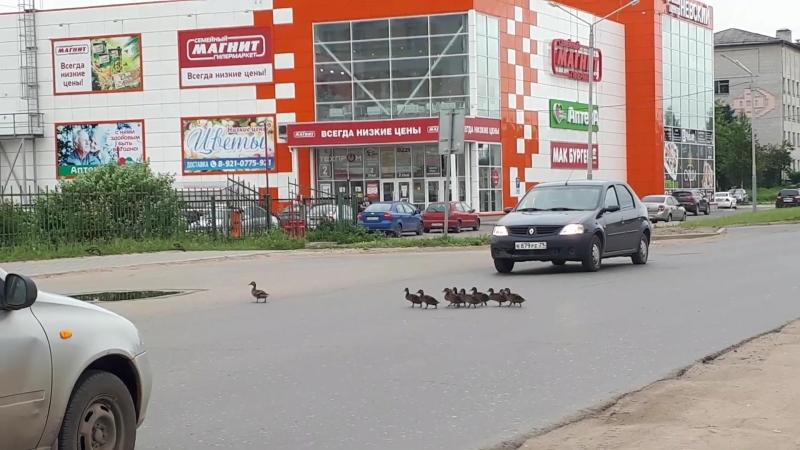 Водитель, будь внимателен, пешеходы бывают разными!