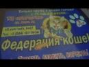 Выставка кошек ТЦ Атриум